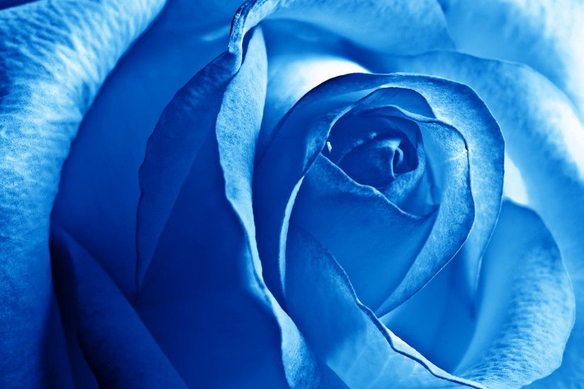 free wallpapers blue rose wide download high definiton wallpapers windows  10 backgrounds 4k hi res quality images best colours artwork 2560×1600  Wallpaper ...