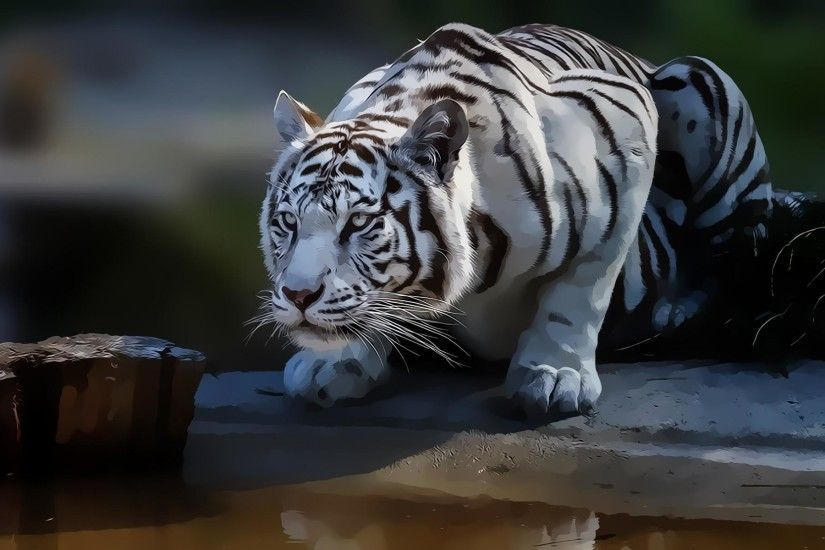 wallpaper.wiki-White-Tiger-Background-HD-PIC-WPE00127