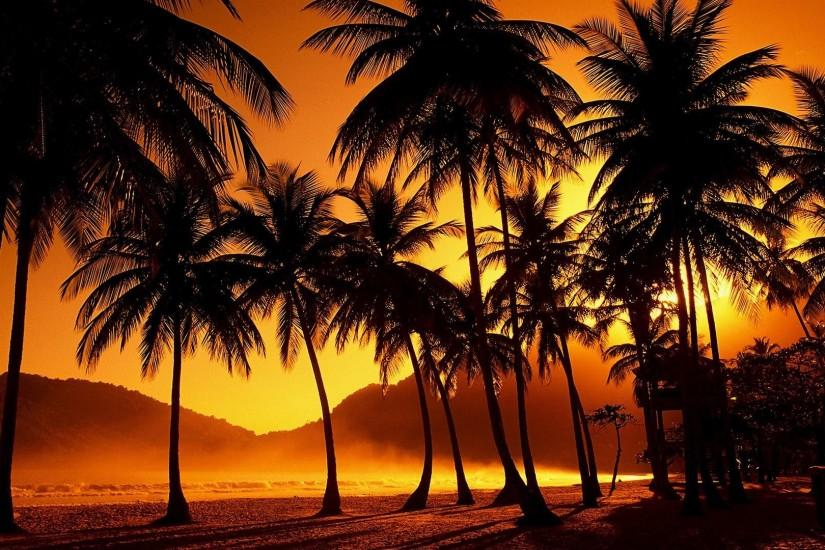 Beautiful Palm Tree Wallpaper