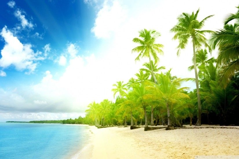 Palm Trees Beach Hd Desktop Wallpaper High Definition Palm Tree Wallpaper