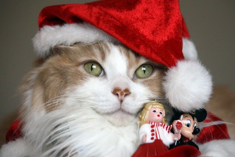 3840x2160 Wallpaper cat, christmas costume, toys, holiday