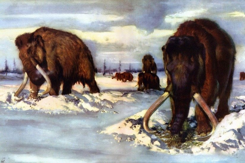 Picture Mammoth Animals Ancient animals 2048x1152