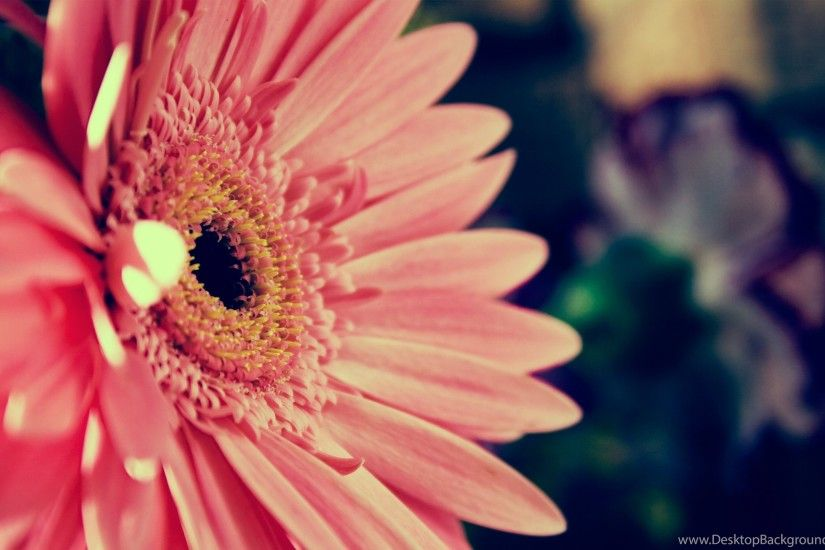 Pink Flower Backgrounds, Wallpaper, Pink Flower Backgrounds Hd ..