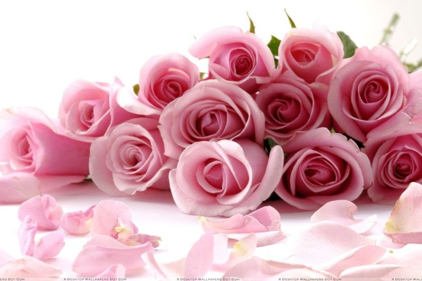 "You are viewing wallpaper titled ""Pink Roses On White Background ..."