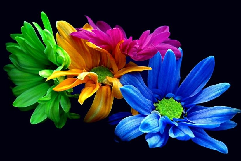 Rainbow Daisies for the centerpieces
