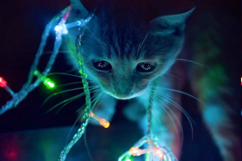 animals, Cat, Christmas Lights Wallpapers HD / Desktop and Mobile  Backgrounds