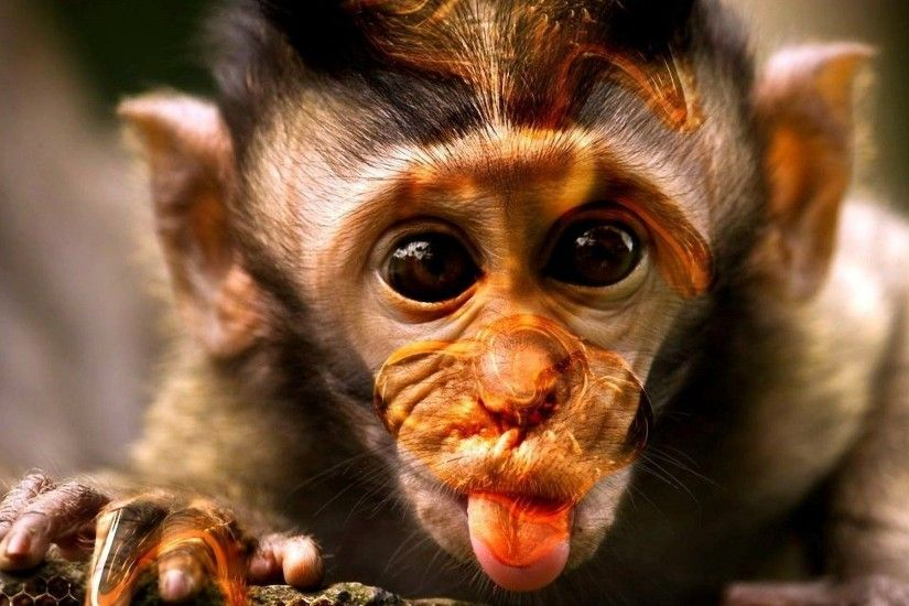 Monkey Wallpapers HD Pictures One HD Wallpaper Pictures ... - HD Wallpapers