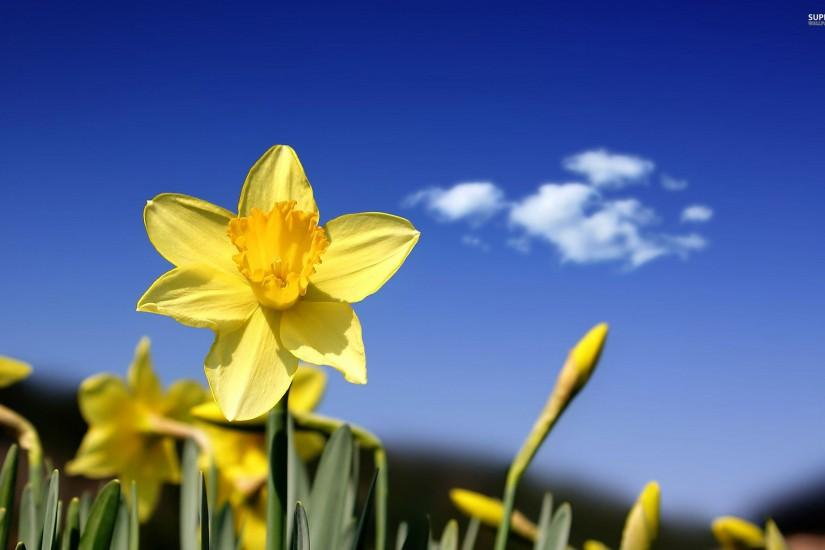 top spring wallpaper 2560x1600 high resolution