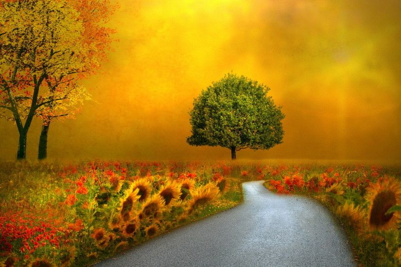 Landscapes nature autumn fall seasons flowers roads pathways wallpaper |  1920x1280 | 22727 | WallpaperUP