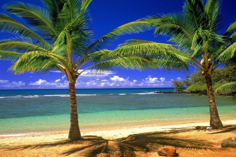 Palm Tree Society Island Beach - Beach, Nature Wallpapers