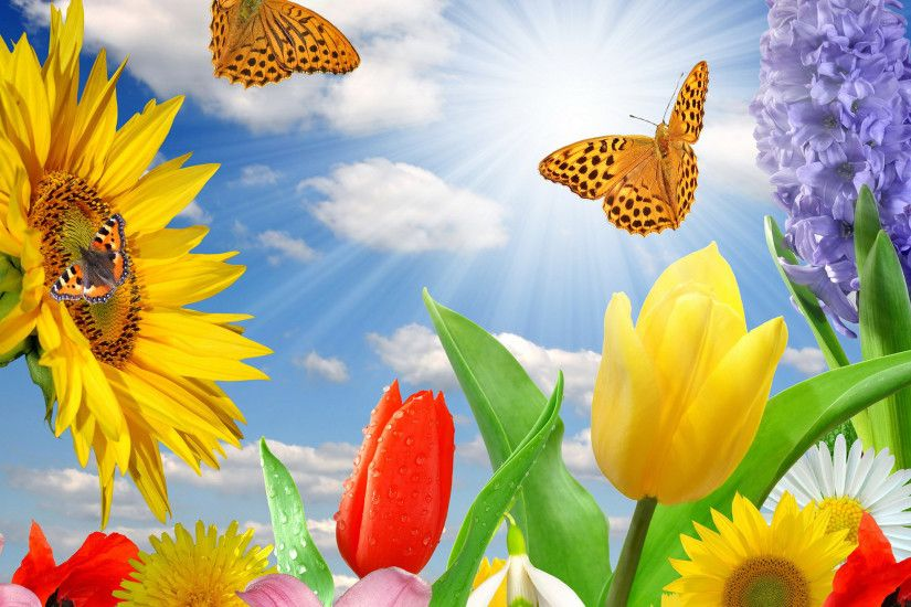 Spring Flowers And Butterflies Wallpapers | The Art Mad Wallpapers