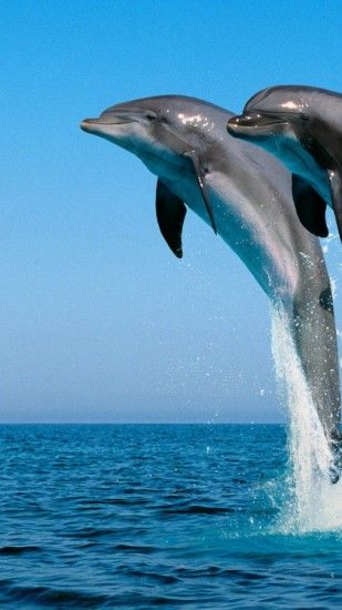 1080x1920 Wallpaper dolphins, jump, water, sea, spray, synchronously