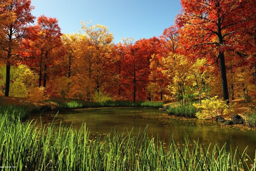 Fall Pond wallpapers and stock photos