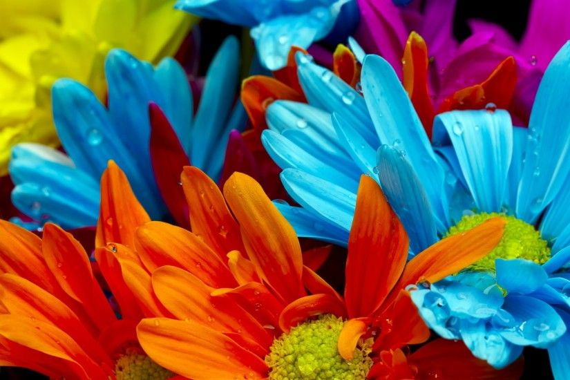 Colorful Flower Hd Desktop Wallpaper
