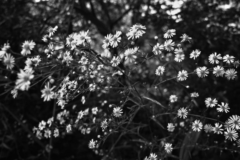 Black And White Background Tumblr Flowers