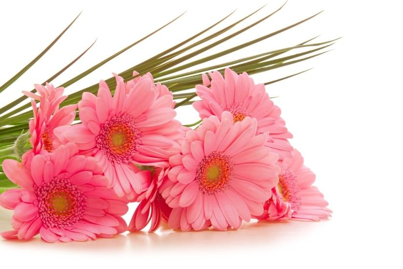 wallpaper.wiki-Pink-Flowers-Image-2560x1600-1-PIC-