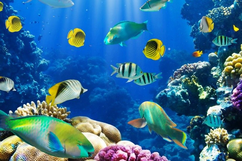 nature fish coral reef exotic