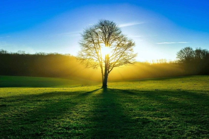 Trees Nature Grass Sun Sky Meadow Amazing Background Wallpapers