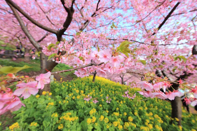 1920x1080 <b>Spring Cherry Blossom Wallpaper</b>