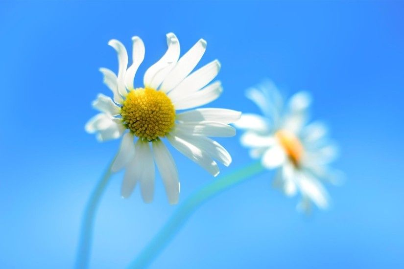 3840x2160 Wallpaper daisy, couple, flower, background, sky