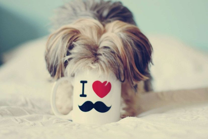 Pretty Yorkshire Terrier Wallpapers - Wallpaper Cave In addition to Lovable  Puppy With Mustache Wallpaper