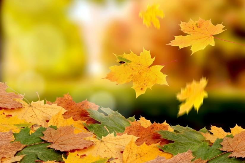 Nature leaves autumn fall seasons wallpaper | 1920x1080 | 40050 |  WallpaperUP