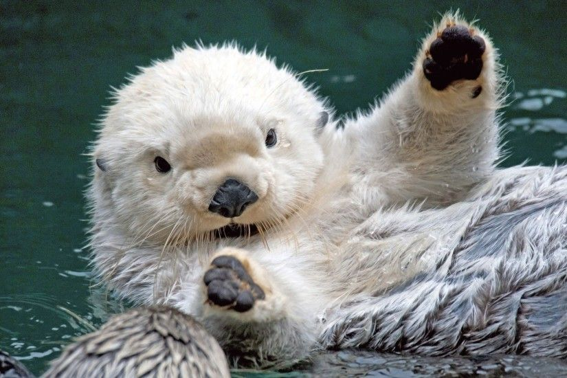 Sea Otter Wallpapers - Wallpaper Cave