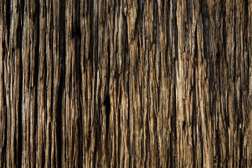 tree wood, texture, background, wood
