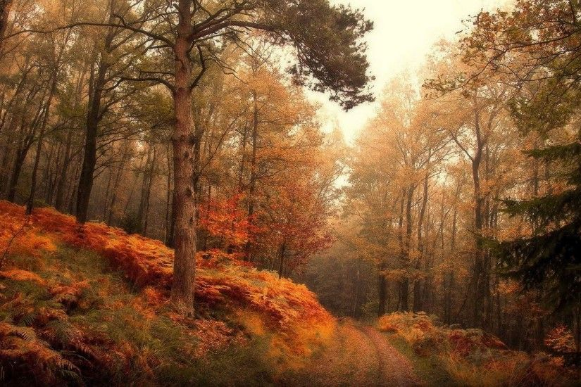 Trees Leaves Leaf Autumn Landscape Tree Nature Forest Fall Animated Desktop  Wallpaper