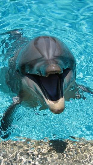dolphin, smiling, water, pool