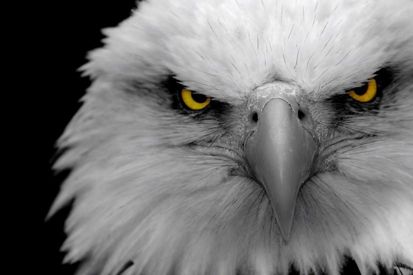 eagle wallpaper backgrounds hd