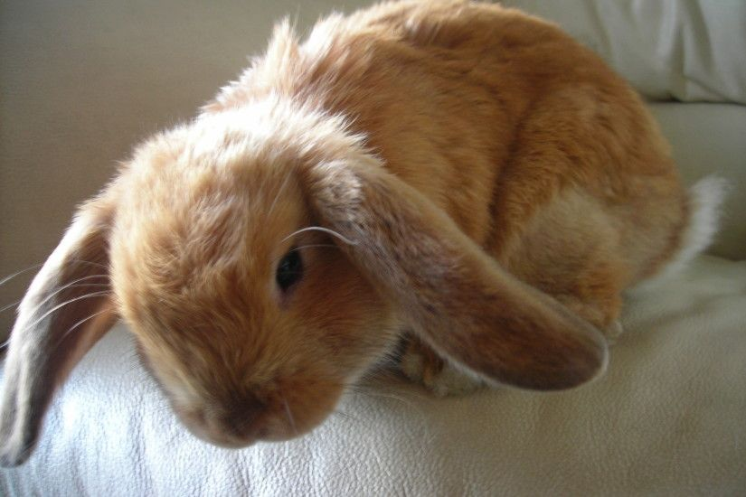 98 best Bunnies~ images on Pinterest | Baby animals, Baby bunnies and Bunny  bunny