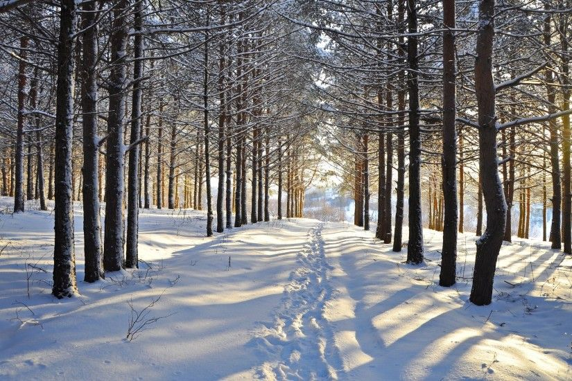 Snowy Forest Steps Vale Sunny wallpapers and stock photos