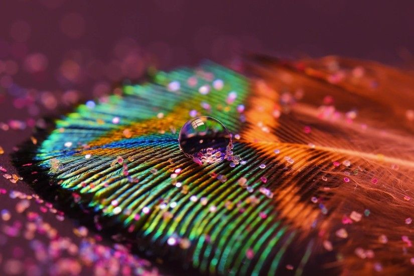 Beautiful Peacock Feather Images | HD Wallpapers Images