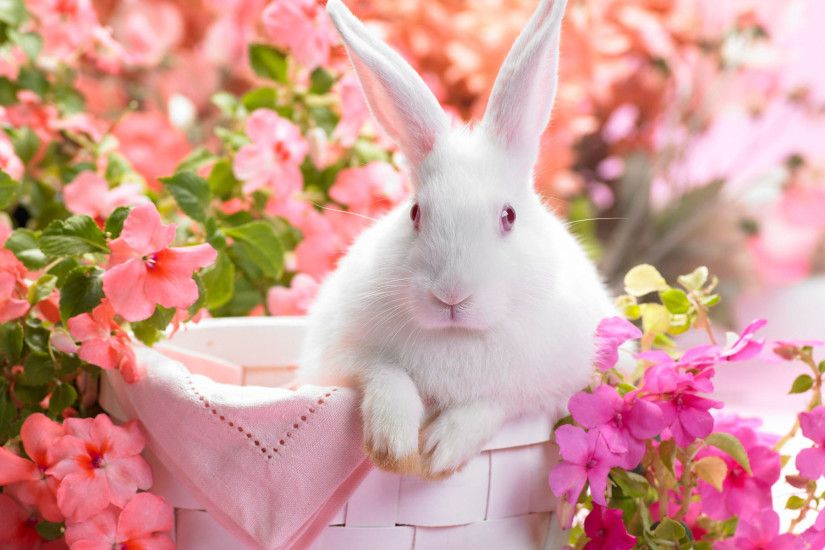 Top Wallpaper Cute White Bunny Wallpapers