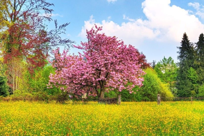 1920 x 1200 px free high resolution wallpaper spring scenes by Pitt Backer  for - TWD