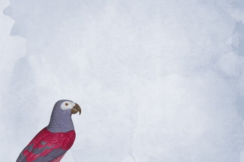 ... Parrot Wallpaper Background Parrot Parrot