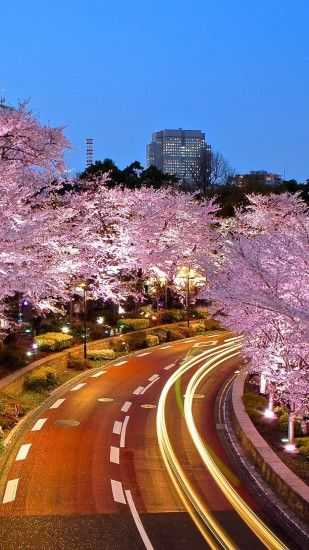 10 Cherry Blossom wallpapers for your iPhone/Android smartphones (Sakura)
