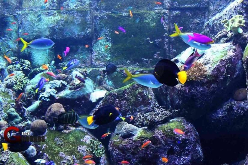3d Live Wallpapers Free Download For Ipad: Aquarium Wallpaper ·① Download Free Beautiful High