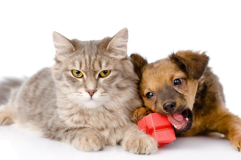 Cat & Dog Cat Dog Gift Puppy Wallpaper