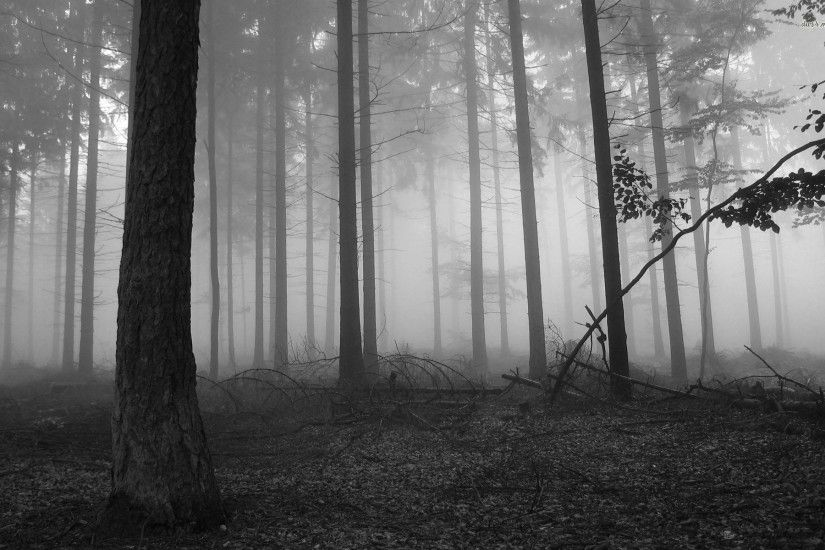 Dark Forest wallpaper - 1061842