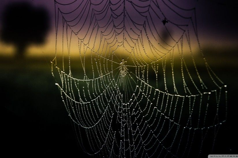Ipad Images of Spider Web by Cailyn Ilyasov