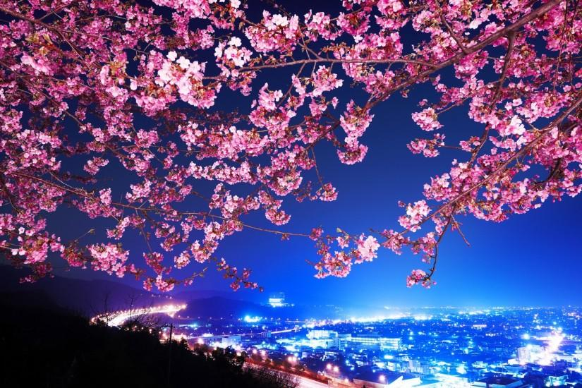 most popular cherry blossom wallpaper 1920x1200 pc