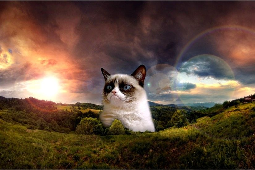 Grumpy Cat. Grumpy Cat No Wallpaper