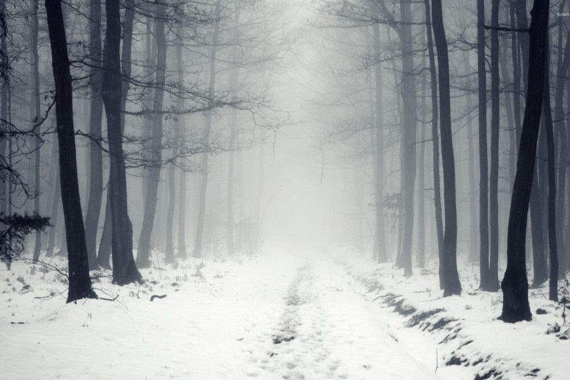 ... snowy path in the foggy forest 2 wallpaper nature wallpapers ...