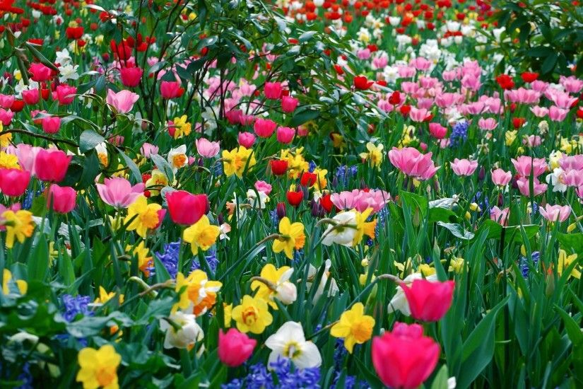 Picture Cool Backgrounds Spring Flower, Wallpapers, HD Wallpapers .