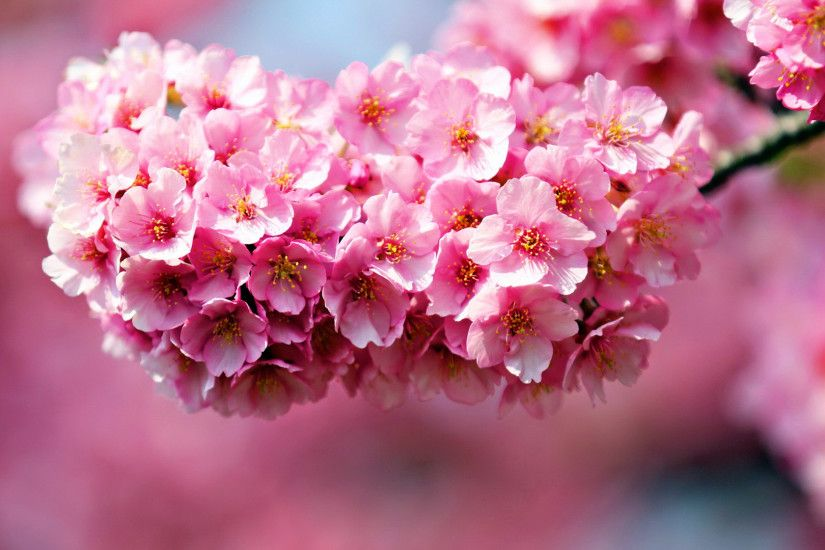 desktop backgrounds of flowers Collection (60 ) Flower Wallpaper Backgrounds  | flowers for flower lovers.: Flowers .