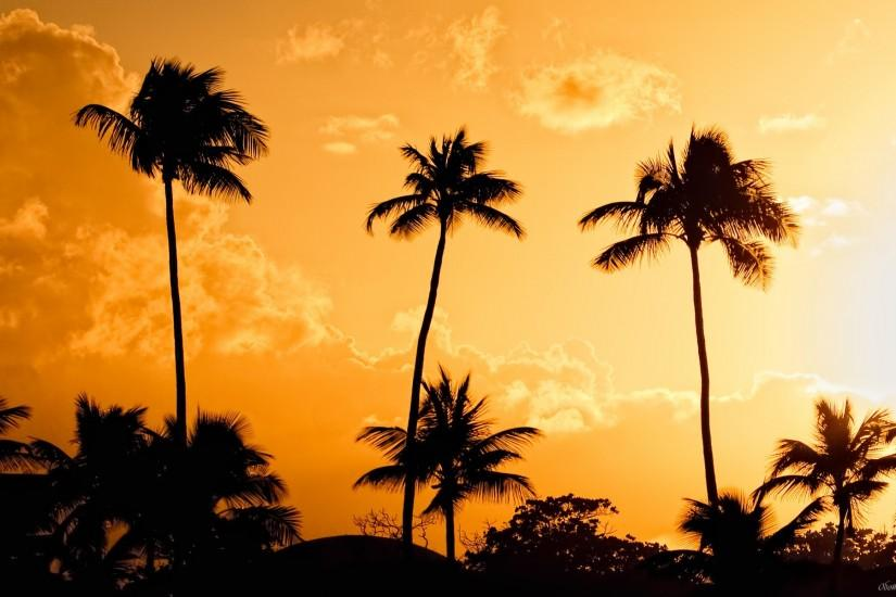 Palm trees at sunset background wallpaper | HD Desktop Wallpaper