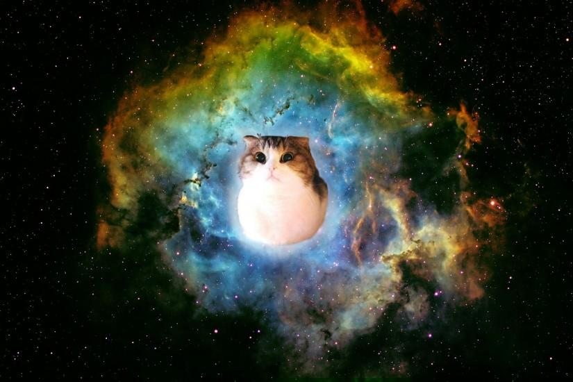 Taco Cat In Space Wallpaper