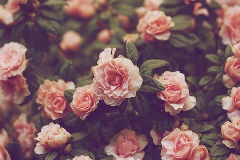 Photos Download Vintage Floral Backgrounds.